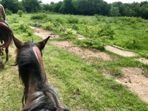 top of my horse